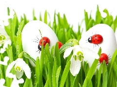 snowdrops, ladybugs, Spring, eggs, Easter