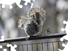 Sparrow, hand-rail, squirrel
