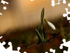 Snowdrop, Colourfull Flowers, Spring, White