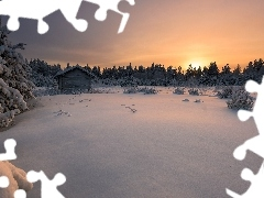Sunrise, Spruces, viewes, winter, cote, Snowy, trees