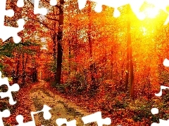 sun, autumn, Way, rays, forest