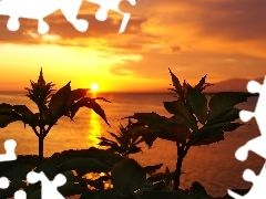 sun, west, Plants, sea