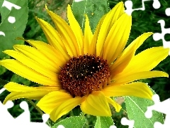 Colourfull Flowers, Sunflower decorative