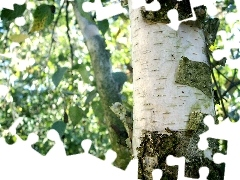 cork, birch-tree, trees