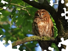owl, branch, trees, Brown Owl