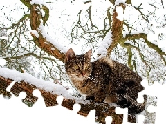 dun, winter, trees, cat