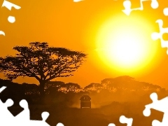 sun, trees, Safari