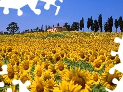 trees, viewes, sunflowers, house, Field
