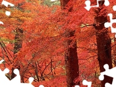 trees, viewes, autumn, color, forest