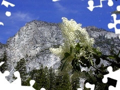 trees, white, lilac, Mountains, viewes, twig