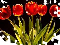 red, tulips, five