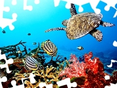 reef, Caribbean, turtle, fishes, coral, sea