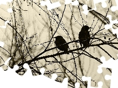 Two cars, an, twig, starlings
