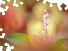 Colourfull Flowers, color, background, lily of the Valley