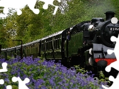 viewes, trees, Train, Flowers, locomotive