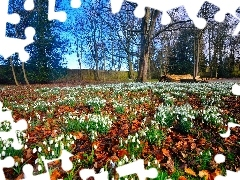 Meadow, trees, viewes, snowdrops