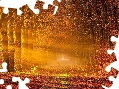 rays of the Sun, forest, Way, trees, autumn, viewes
