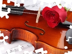 violin, Tunes, red hot, rose