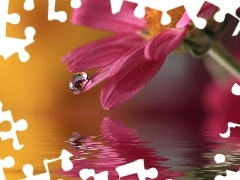 water, drop, Close, Colourfull Flowers