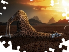 water, sun, giraffe, west