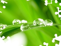 Close, water, grass, drops