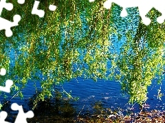 water, Willow, Leaf