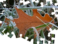 leaf, autumn, White frost, oak