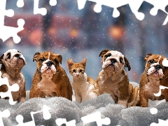 English Bulldogs, four, winter, snow, cat, Dogs