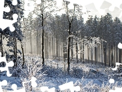 winter, forest, snow