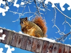 winter, squirrel