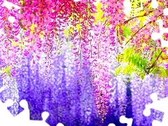 Wisteria Floral