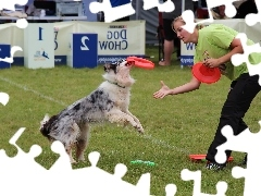 Women, Frisbee, dog, Border Collie
