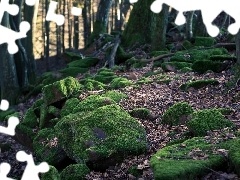 viewes, forest, Wooded, moss, Stones, trees