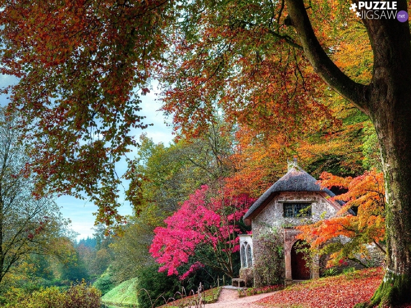 viewes, autumn, Way, trees, house