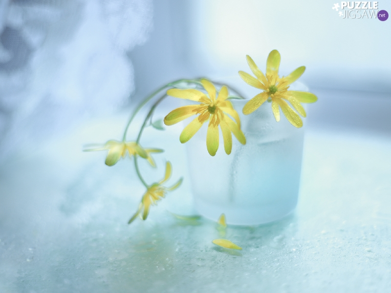 fig buttercup, Flowers, vase, Yellow