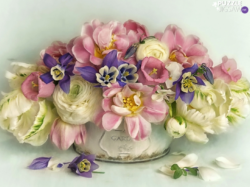 Columbines, graphics, bouquet, glaucoma, Flowers