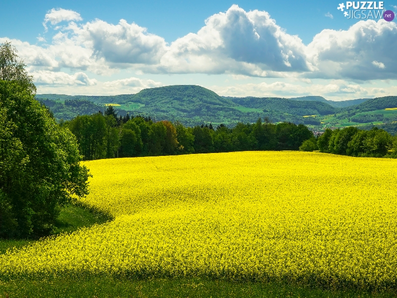 The Hills, Yellow, clouds, Flowers, viewes, rape, Field, trees