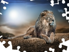Lion, sun, Rocks, glamour