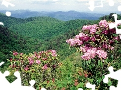 forested, flourishing, rhododendron, Mountains