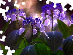 sun, hydrangea, luminosity, ligh, Flowers, flash, Close