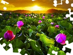 west, Field, flowers, sun