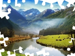 Mountains, woods, Fog, River