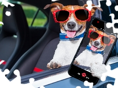 Glasses, dog, Tounge, Funny, Smartphone, Jack Russell Terrier