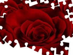 texture, Red, roses