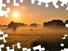 field, west, trees, viewes, Fog, sun
