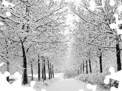 trees, viewes, lane, Snowy, winter