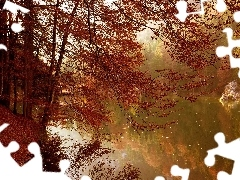 autumn, trees, viewes, River