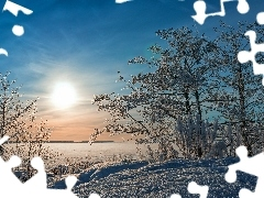 trees, sun, Bush, lake, east, viewes, snow