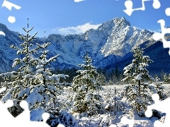 Mountains, Spruces, winter, forest